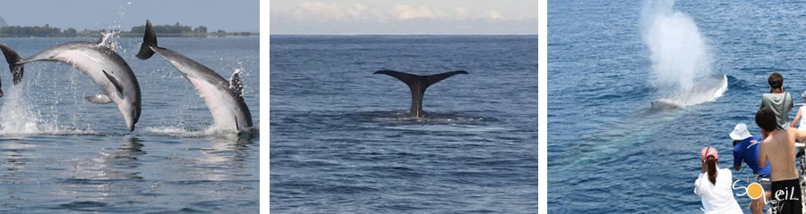 whale watching liguria grecia