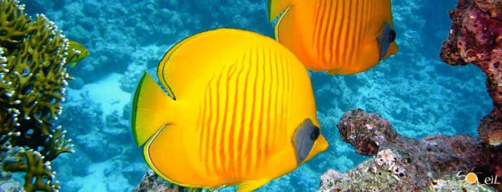 crociere alle isole vergini caraibi
