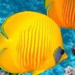 Crociere alle Isole Vergini – Caraibi